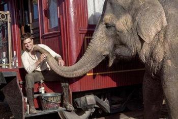 Agua para elefantes 2011 - robert pattinson