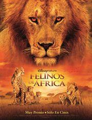 Felinos de África (African Cats) - Reseña