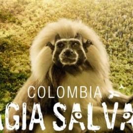Reseñas Colombia: Magia Salvaje, el documental sobre su biodiversidad que bate récord en taquilla