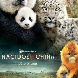 Reseña Nacidos en China, nuevo documental de Disney Nature